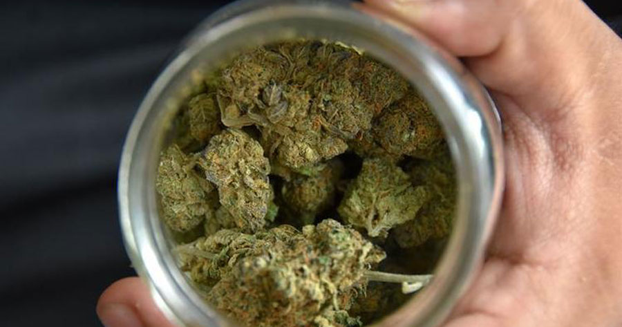 La discutible tendencia a la baja en el consumo de marihuana que se atribuye el Senda